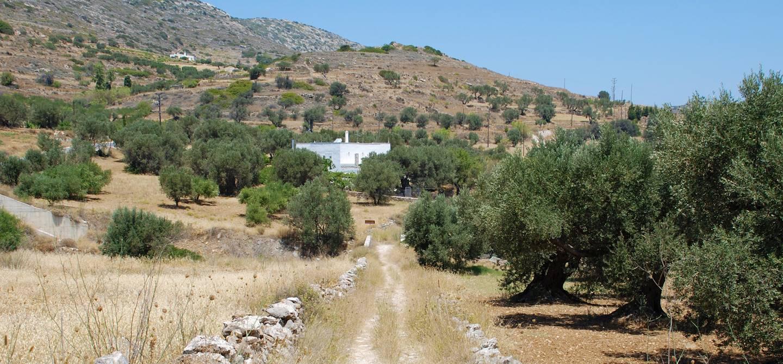 Paros - Les Cyclades - Grèce