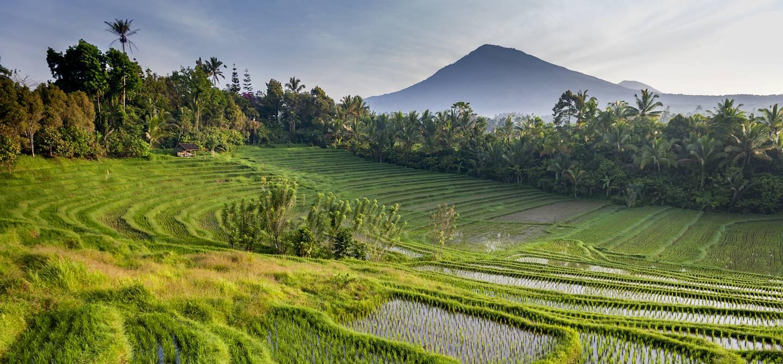 Rizières et Mont Batukaru - Wongaya Gede - Penebel - Bali - Indonésie