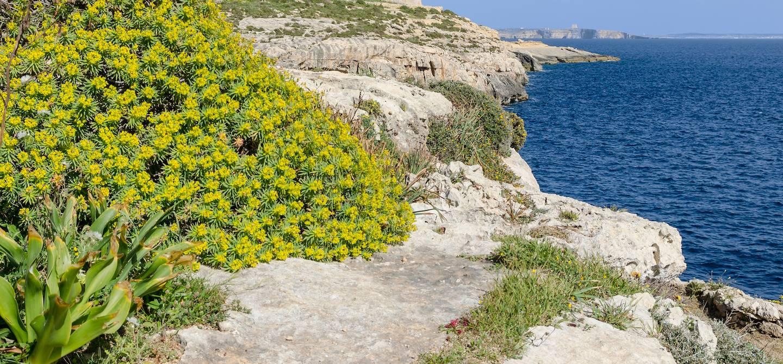Ta'Cenc - Ile de Gozo - Malte