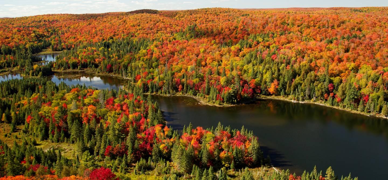 Parc provincial Algonquin - Muskoka - Ontario - Canada