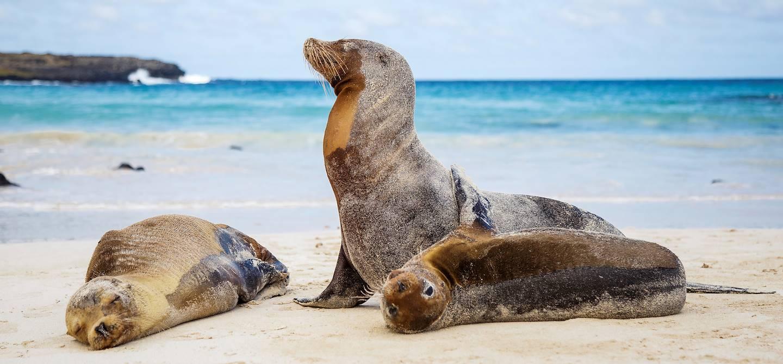 Otaries sur une des plages des îles Galapagos - Equateur