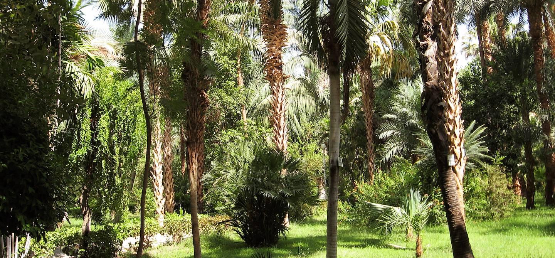 L'île aux fleurs - Assouan - Egypte