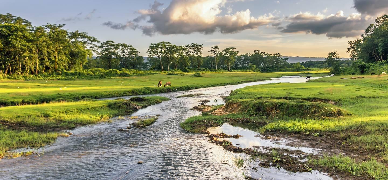 Parc National de Chitwan - Népal