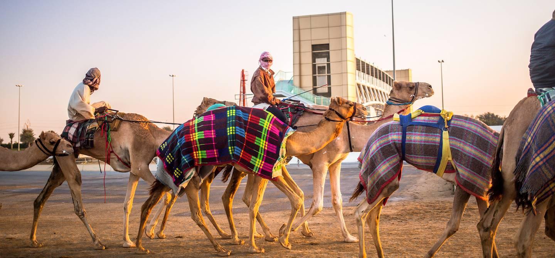 Dubaï Camel Racing Club :  entrainement des chameaux - Dubaï - Emirats Arabes Unis