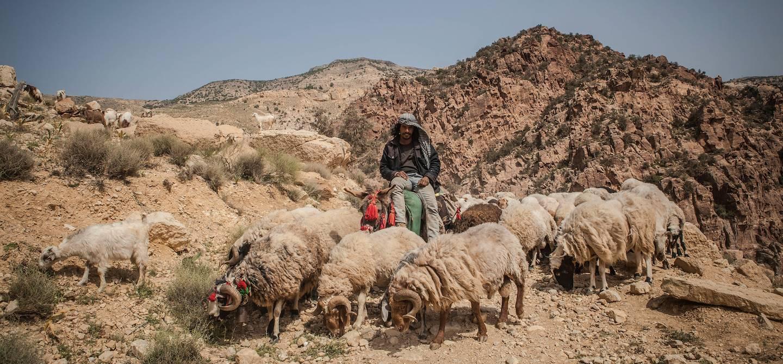 Randonnée sur le Wadi Dana Trail : rencontre avec un bédouin et son troupeau de moutons - Dana - Jordanie