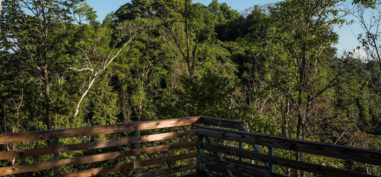 Danta Corcovado Lodge - Puerto Jimenez - Péninsule de Osa - Costa Rica