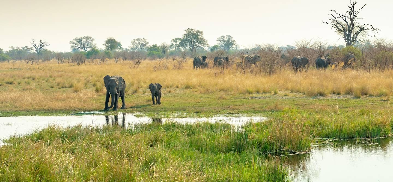 Éléphants dans la région de Caprivi - Namibie