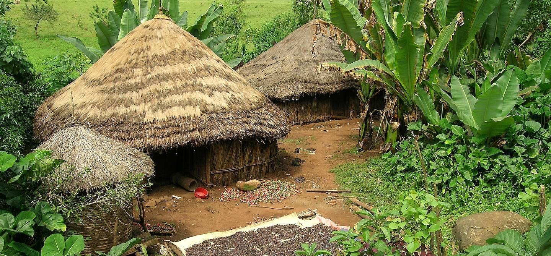 Village de paysans Sidamas cultivant le café - Yirgalem - Ethiopie
