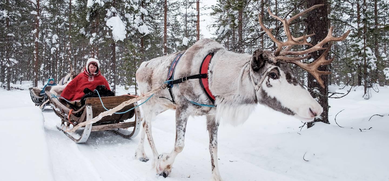 Safari en traîneau à rennes à travers la forêt - Rovaniemi - Laponie - Finlande