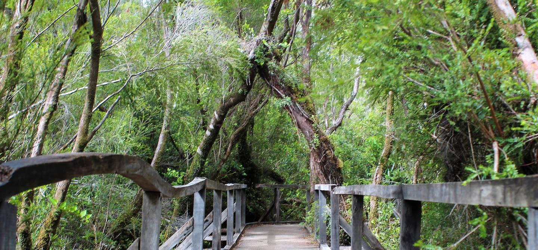 Sentier dans le parc national de Chiloé - Chili