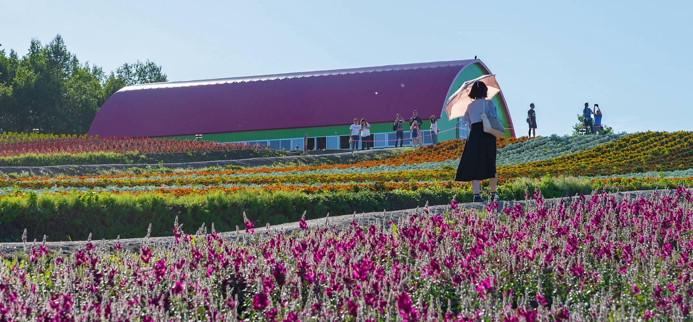 Shikisai-no-oka - Biei - Hokkaido - Japon