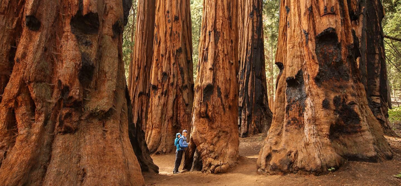 Parc national de Sequoia - Californie - Etats-Unis