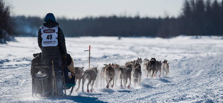 Musher et ses chien sur le parcours de l'Iditarod - Alaska - Etats-Unis