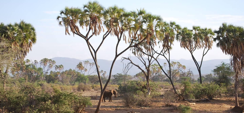 Elephants dans la réserve nationale de Samburu - Kenya