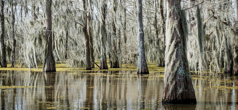 Le bayou Atchafalaya en bateau - Louisiane - Etats Unis