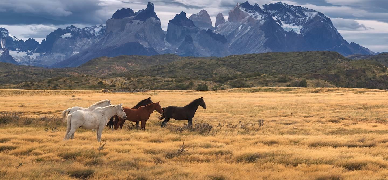 Parc national Torres del Paine - Chili