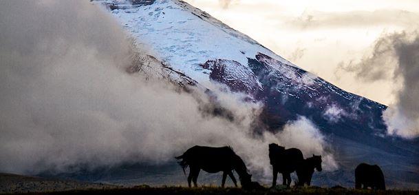 Allée des Volcans