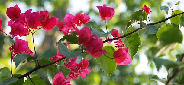 Jardin botanique de Coconi