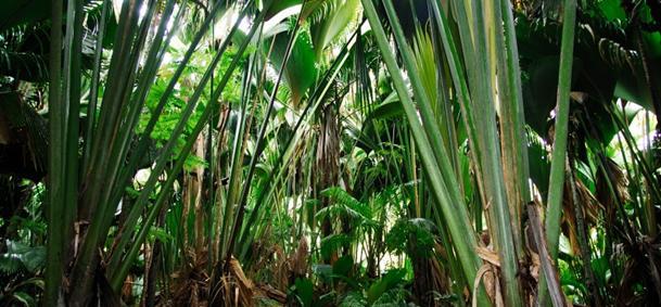 Vallée de Mai - Praslin