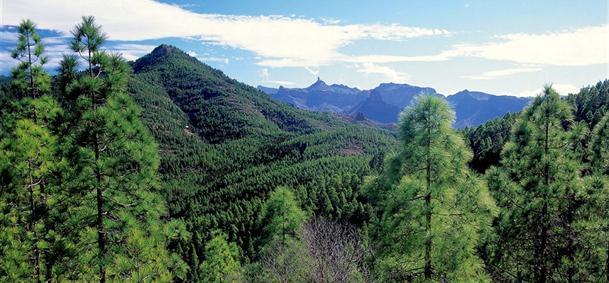 Forêt de Pinar de Tamadaba - Gran Canaria