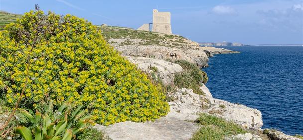 Ta'Cenc - Gozo