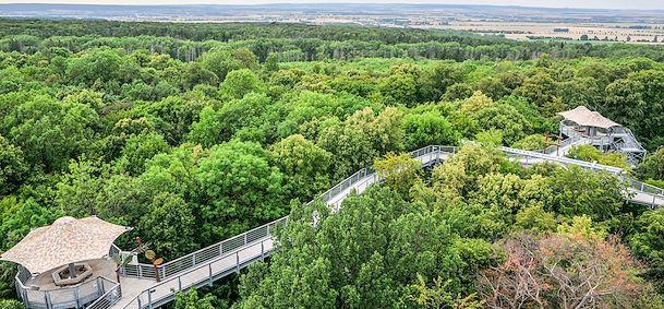 Parc National du Hainich