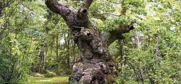 Réserve naturelle de Trollskogen