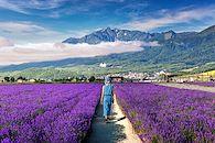 Un été nature à Hokkaido - Japon -