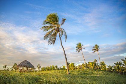 Praia do Forte - Etat de Bahia - Brésil - Andr/Stock.adobe.com