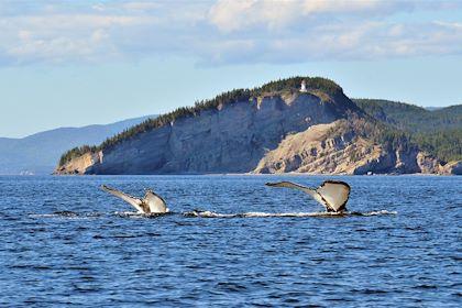 Baleines au large du cap Gaspé, dans le parc national du Canada Forillon - Québec - Le Quebec Maritime/Marc Loiselle