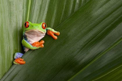 Costa Rica - kikkerdirk / Fotolia.com