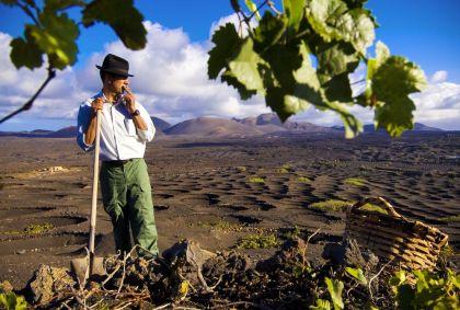 Vignes sur l'île de Lanzarote - Iles Canaries - Espagne - Marc Dozier / hemis.fr
