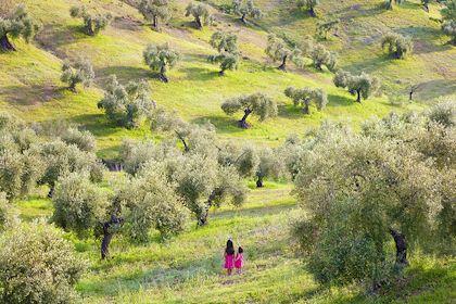 Fillettes dans un champ d'oliviers - Andalousie - Espagne - Jon Arnold Images/ hemis.fr