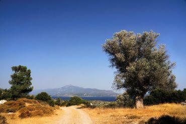 Samos - Felinda / Fotolia.com