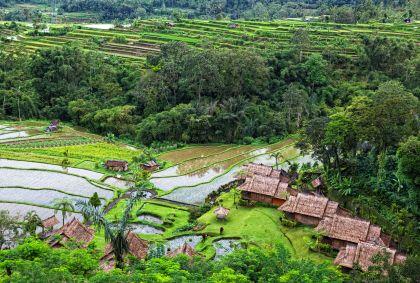 Rizières - Bali - Indonesie - Elena Shchipkova / fotolia.com