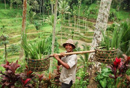 Paysan dans les rizières à Bali - Indonésie - Ariane Citron/stock.adobe.com