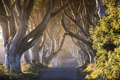 The Dark Hedges - Comté d'Antrim - Irlande du Nord - Northern Ireland Tourist Board