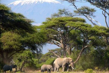 Amboseli - Mont Kilimandjaro - Kenya