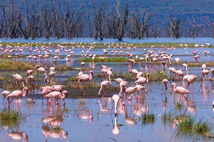 Flamants roses sur le lac Nakuru - Vallée du grand rift - Kenya - Familie-eisenlohr.de/Stock.adobe.com