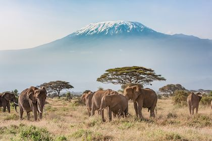 Éléphants dans la réserve du Masai Mara - Kenya - Khanbm52/Stock.adobe.com