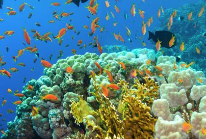 Corail aux Maldives - Irochka/fotolia.com