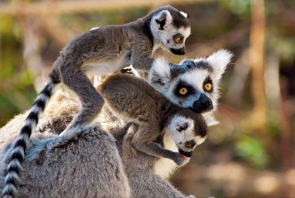 Madagascar - Eric Gevaert / Fotolia.com