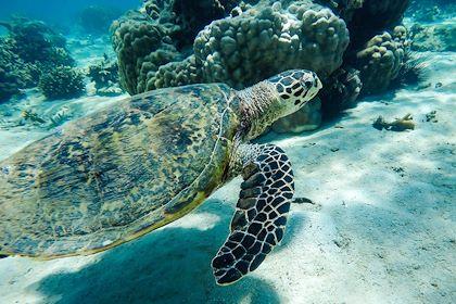 Tortue marine - Nosy Sakatia - Madagascar - Martina / stock.adobe.com