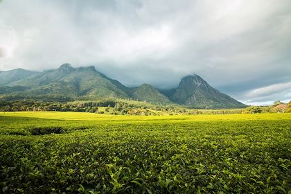 Massif Mulanje - Région Sud - Malawi - Madelein Wolfaardt/fotolia.com