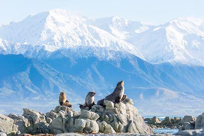 Kaikoura - Canterbury - Nouvelle-Zélande - Kyle Mulinder / New Zealand Tourism