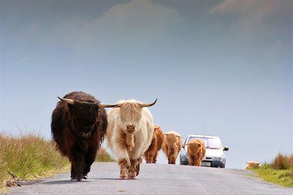 Sur une route des Highlands - Ecosse - SoulPix Photography/fotolia.com