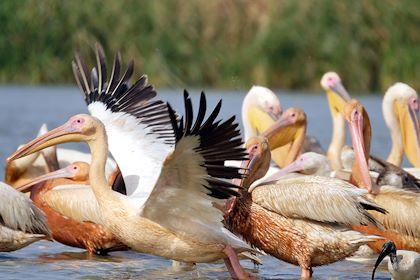Parc national des oiseaux du Djoudj - Région de Saint-Louis - Sénégal - Maryline Goustiaux