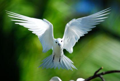 Bird Island - Seychelles - Raymond Sahuquet / Seychelles Tourism Board