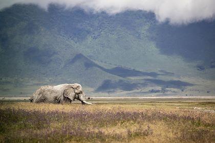 Safari au Cratère de Ngorongoro - Cratère de Ngorongoro - Nord - Tanzanie - Pierre Vassal/HAYTHAM-REA/Comptoir des Voyages