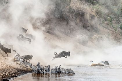 Migration des gnous et des zèbres - Parc du Serengeti - Tanzanie - adogslifephoto/stock.adobe.com